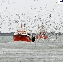 BIM SugarCRM Implementation Aims to Provide the Irish Fishing Community with Better Communication